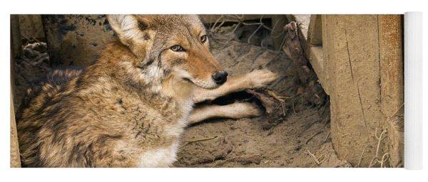 Resting Coyote Yoga Mat