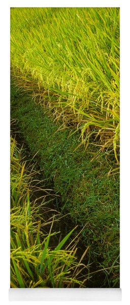 Yoga Mat featuring the photograph Rice Field Hiking by T Brian Jones