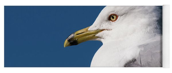 Ring-billed Gull Portrait Yoga Mat