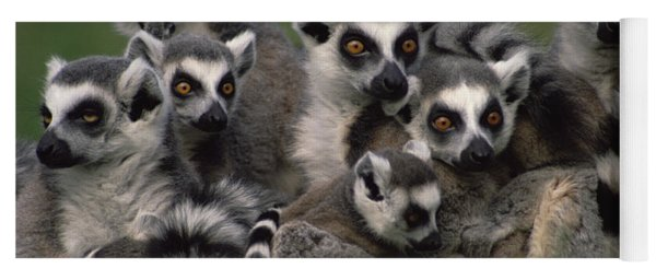 Ring-tailed Lemur Lemur Catta Group Yoga Mat