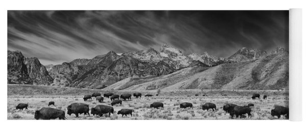 Roaming Bison In Black And White Yoga Mat