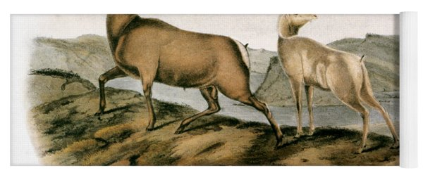 Rocky Mountain Sheep, 1846 Yoga Mat