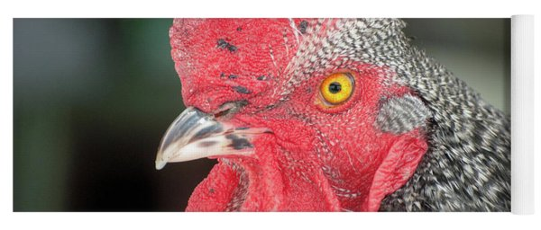 Rooster Named Brute Yoga Mat