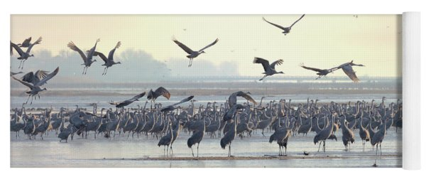 Yoga Mat featuring the photograph Roosting On The Platte by Susan Rissi Tregoning