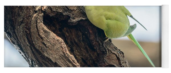 Rose-ringed Parakeet 03 Yoga Mat