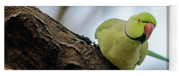 Rose-ringed Parakeet 04 Yoga Mat