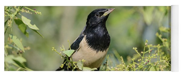 Rosy Starling 1 Yoga Mat
