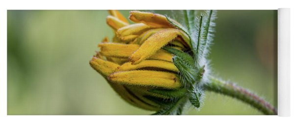 Yoga Mat featuring the photograph Rudbeckia Fuzzy Bud by Patti Deters
