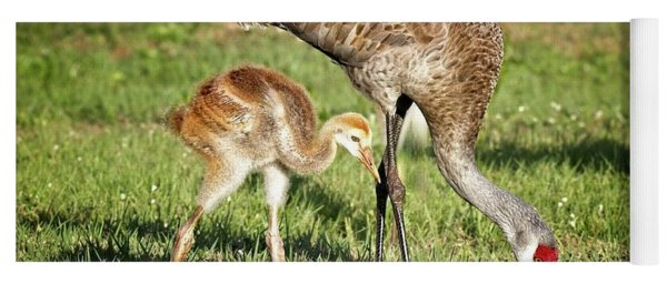 Sandhill Crane And Colt Yoga Mat