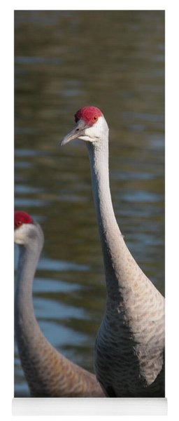 Sandhill Crane Couple By The Pond Yoga Mat
