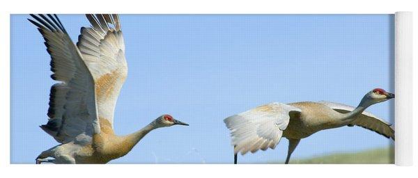 Sandhill Cranes Taking Flight Yoga Mat