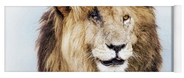 Scar Lion Closeup Square Yoga Mat