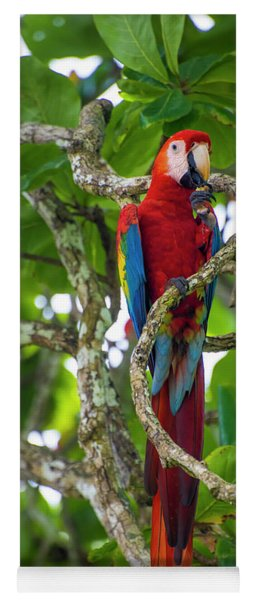 Scarlet Macaw Yoga Mat