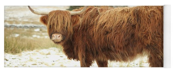 Scottish Red Highland Cow In Winter Yoga Mat