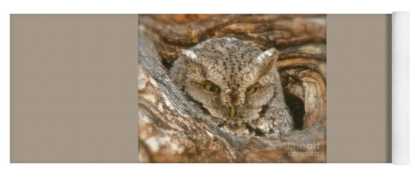 Screech Owl On Spring Creek Yoga Mat