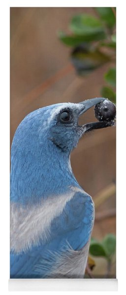 Scrub Jay With Acorn Yoga Mat