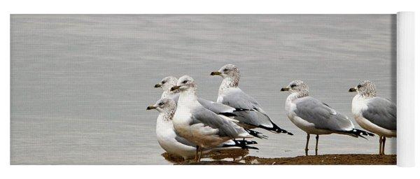 Sea Gulls On Rock Ledge Yoga Mat