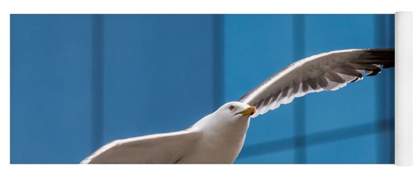 Seabird Flying On The Glass Building Background Yoga Mat