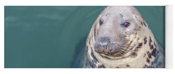 Seal With Long Whiskers With Head Sticking Out Of Water Yoga Mat