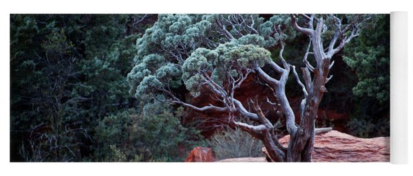 Sedona Tree #3 Yoga Mat