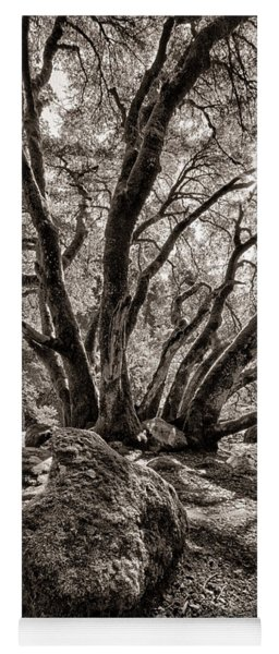 Shadow Tree Yoga Mat