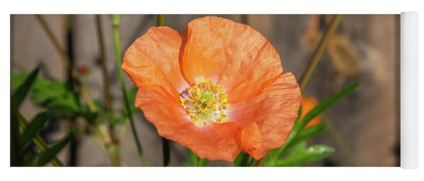 Shirley Poppy 2018-12 Yoga Mat