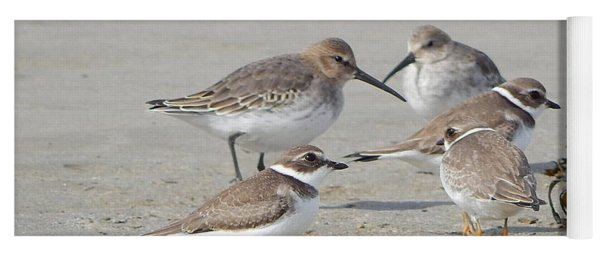 Shorebirds In Nova Scotia Yoga Mat