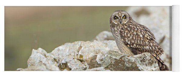 Short-eared Owl In Cotswolds Yoga Mat
