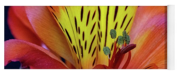 Single Alstroemeria Inca Flower-1 Yoga Mat