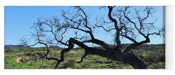 Single Tree Over Narrow Path Yoga Mat