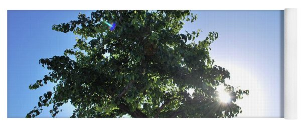 Single Tree - Sun And Blue Sky Yoga Mat