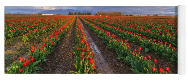 Skagit Tulip Fields Red Rows And Rainbow Yoga Mat