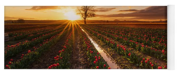Skagit Valley Tulip Fields Golden Sunset Sunstar Yoga Mat