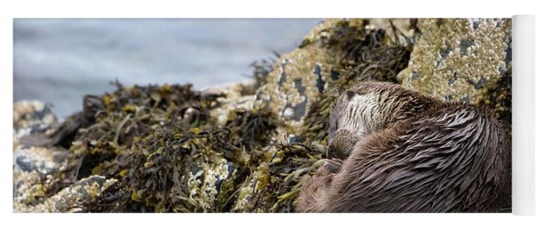 Sleeping Otter Yoga Mat