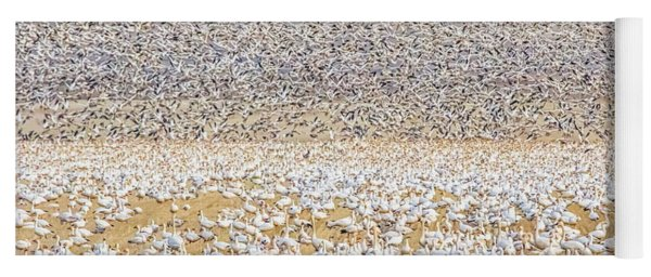 Snow Geese Take Off 1 Yoga Mat