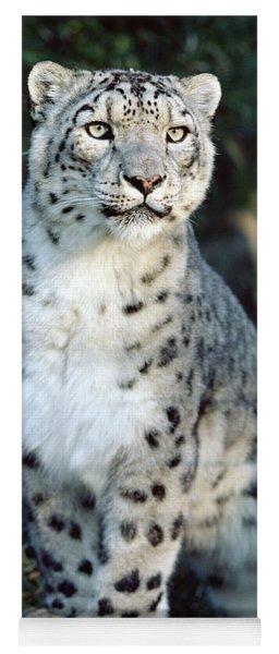 Snow Leopard Uncia Uncia Portrait Yoga Mat