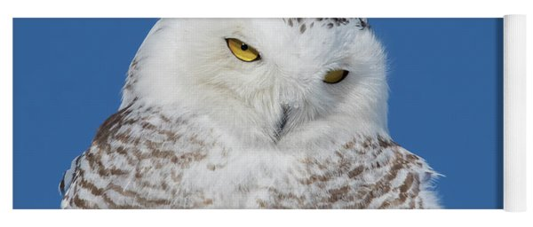 Snowy Owl Portrait Yoga Mat