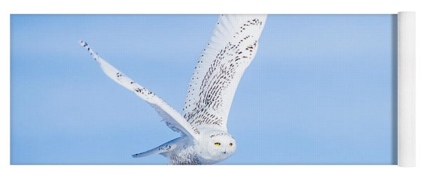 Snowy Owls Soaring Yoga Mat