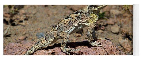 Southern Desert Horned Lizard Phrynosoma Platyrhinos Wild Yoga Mat