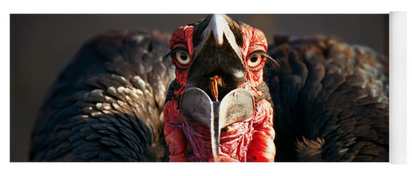 Southern Ground Hornbill Swallowing A Seed Yoga Mat