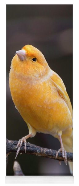 Spanish Timbrado Canary Yoga Mat