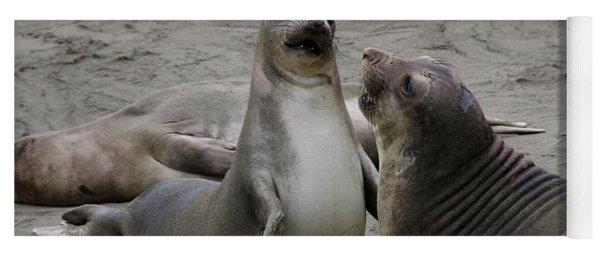 Sparring Seals  Yoga Mat