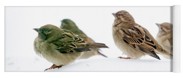 Sparrows In The Snow Yoga Mat