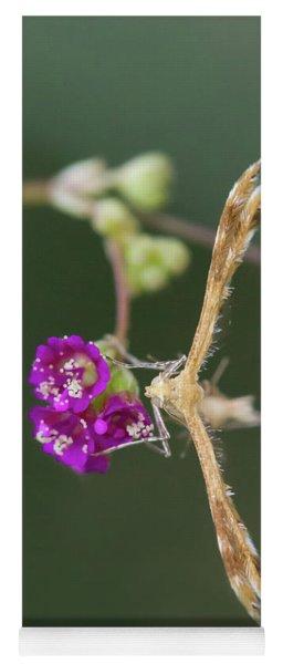 Spiderling Plume Moth On Wineflower Yoga Mat