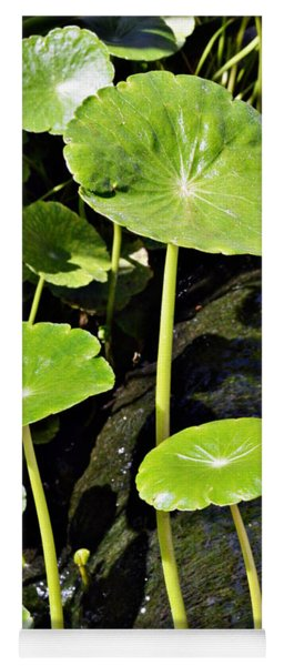 Sprouting Lily Pads Yoga Mat