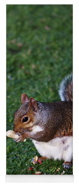 Squirrel Eating Yoga Mat