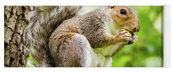 Squirrel Eating On A Branch Yoga Mat