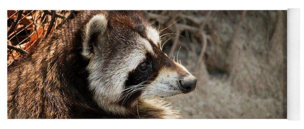 Staring Raccooon Yoga Mat