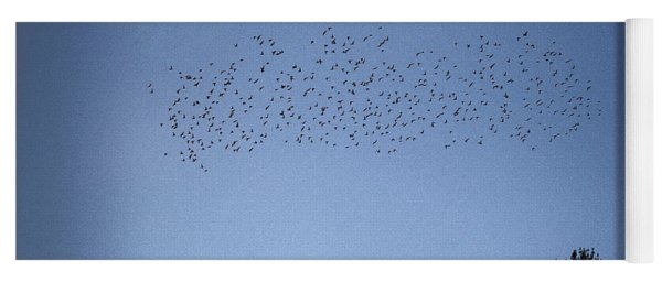 Starlings And Pines Yoga Mat