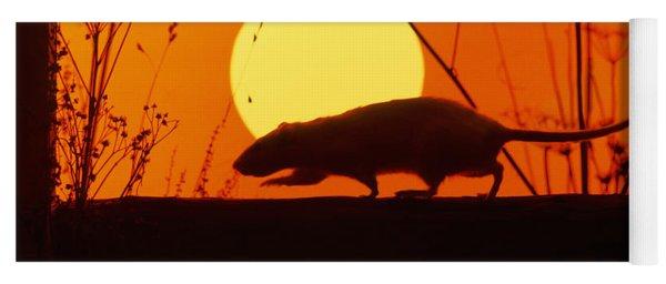 Stranglers Rattus Norvegicus Rat Yoga Mat